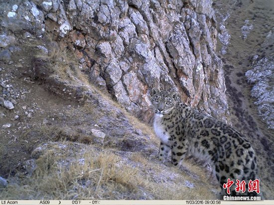 Image of a leopard. (Photo/Chinanews.com)