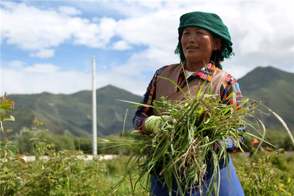 Pasang Drolma, 46, works on a farm near Duishigagyi, a newly built village in Chushul county. The farm is part of the government-backed Pure Land project. (Photo by HOU LIQIANG/CHINA DAILY)