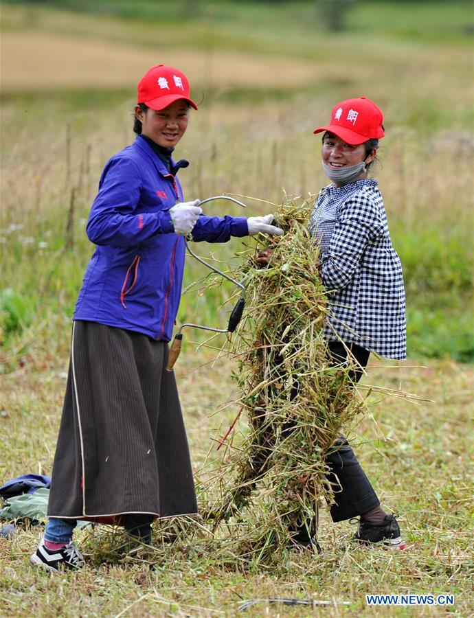 CHINA-NYINGCHI-GRASS-HARVEST (CN)