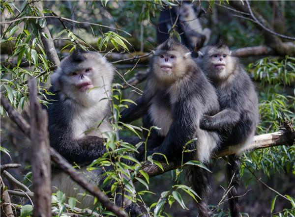 Yunnan animal preserve is a monkey kingdom
